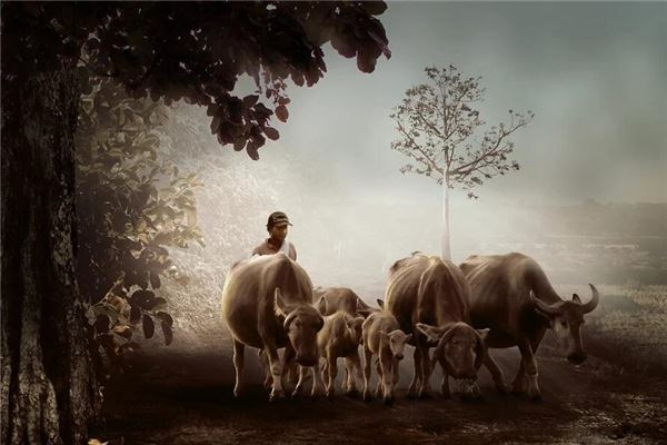 꿈에서 길 양쪽에 소가 있다는 것은 무엇을 의미합니까? 꿈의 점