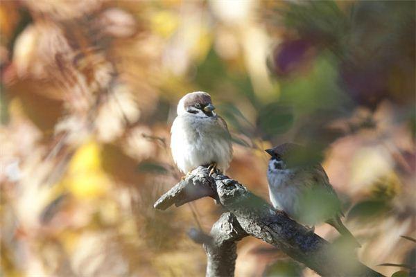 【꿈해몽】꿈에서 참새를 잡는 새 포수의 의미와 상징