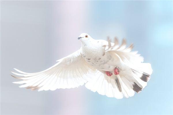꿈에서 비둘기를 잡는다는 것은 무엇을 의미합니까? 꿈의 점