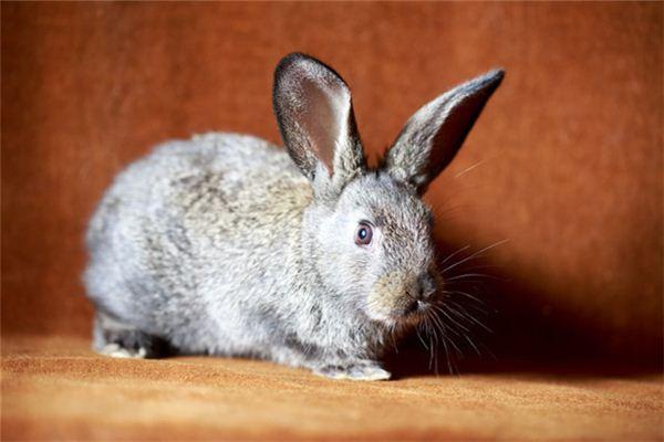【꿈해몽】꿈속에서 집으로 뛰어 드는 토끼의 의미와 상징