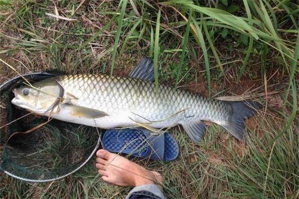 【꿈해몽】꿈에서 물고기를 손으로 잡는 의미와 상징