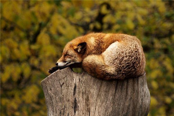 【꿈해몽】꿈속에서 동물의 의미와 상징