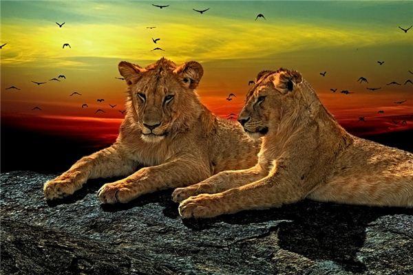 【꿈해몽】꿈에서 동물 머리의 의미와 상징