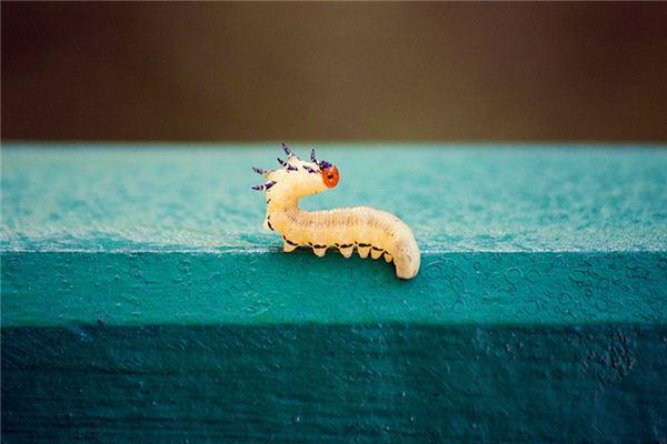 꿈에서 벌레는 무엇을 의미합니까? 꿈의 점