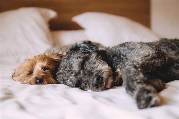 꿈에서 개 짝짓기는 무엇을 의미합니까? 꿈의 점