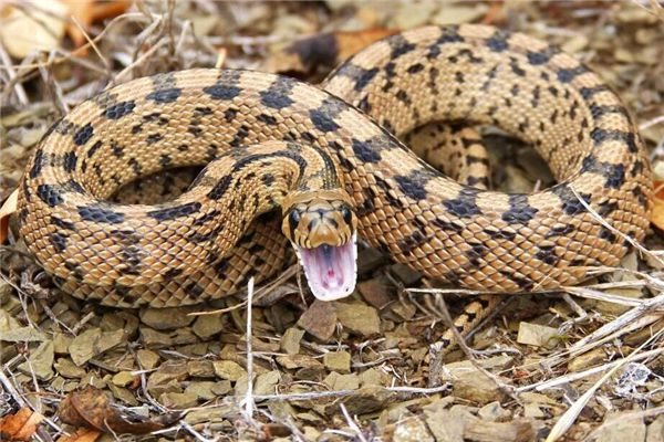뱀이 집에 누워 있다는 꿈은 무엇을 의미합니까? 꿈의 점
