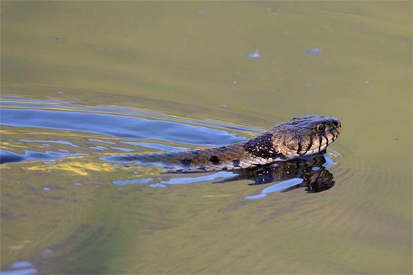 【꿈해몽】꿈에서 뱀 목욕의 의미와 상징