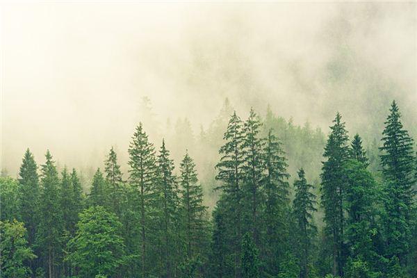 【꿈해몽】꿈에서 푸른 나무의 의미와 상징
