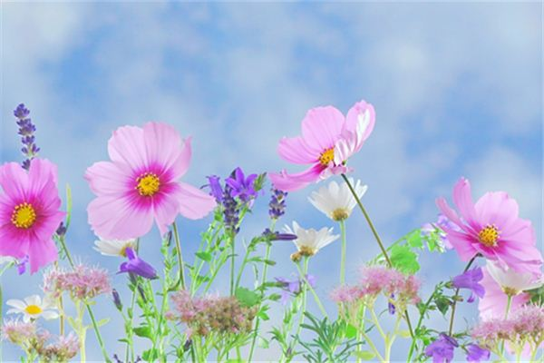 【꿈해몽】꿈속에서 피는 다양한 꽃의 의미와 상징