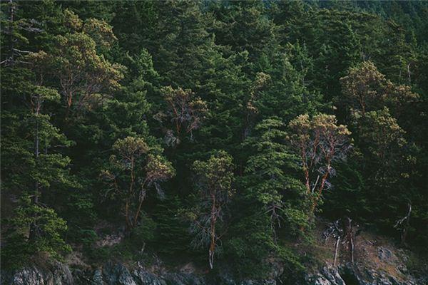 【꿈해몽】꿈에서 무성한 나무의 의미와 상징