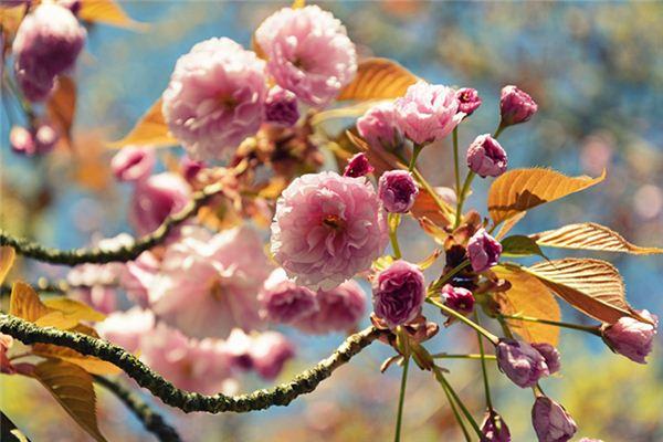 【꿈해몽】꿈속에서 꽃이 피는 나무의 의미와 상징