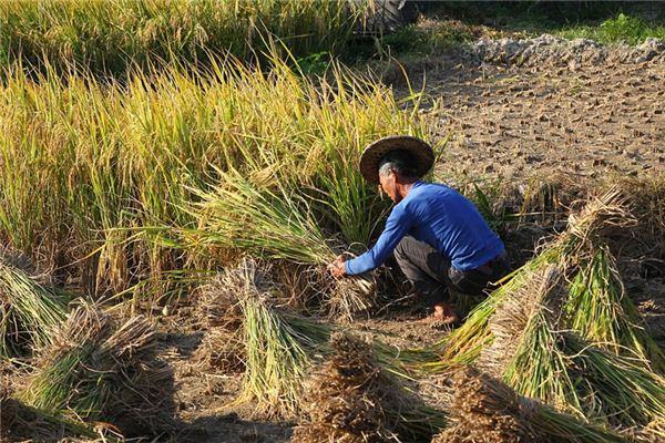 【꿈해몽】쌀을 깎는 꿈의 의미와 상징